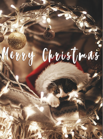 Merry Christmas text on cute kitty in santa hat sitting in basket with lights under christmas tree in festive room. Season's greetings card. Happy Holidays and Happy New Year Stock fotó