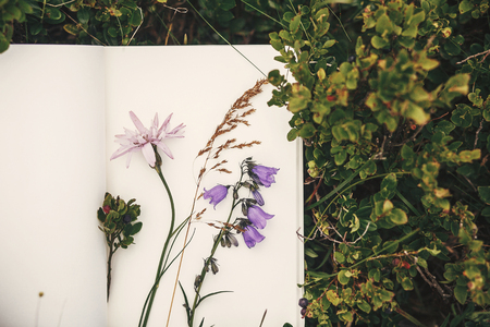 Top view of wildflowers and gathered herbs on paper notebook on blueberry bushes in mountains. Summer travel essentials in mountains. Herbarium