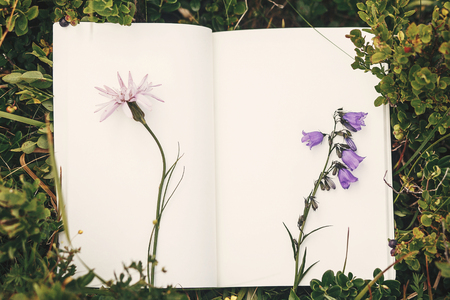 Top view of wildflowers and gathered herbs on paper notebook on blueberry bushes in mountains. Summer travel essentials in mountains. Herbarium. Space for text Stock Photo