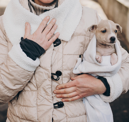 Cute little staff terrier puppy in cozy warm blanket in autumn park. Woman hugging and caressing scared homeless beige puppy in city street. Adoption concept. Dog shelter. Stock Photo