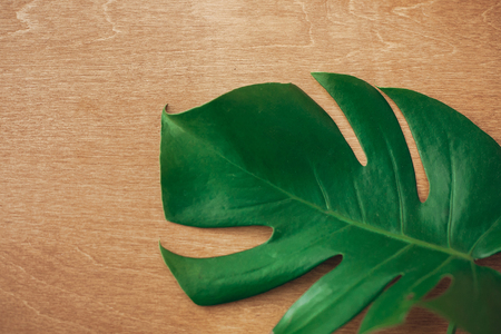 Green monstera leaf on rustic wood, top view with copy space. Summer vacation concept. Eco green technology idea. Tropical background