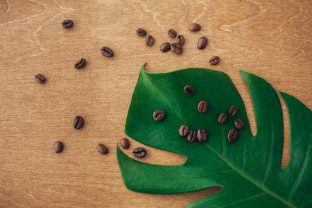 Roasted coffee beans on green monstera leaf on rustic wood in light, flat lay. Eco coffee beans concept, morning hot drink with energy and aroma. Copy space. Green technology, save environment