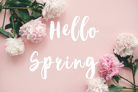 Hello Spring text sign on stylish peonies flat lay. Pink and white peonies border on pastel pink paper with space for text. Stylish floral greeting card. Banco de Imagens