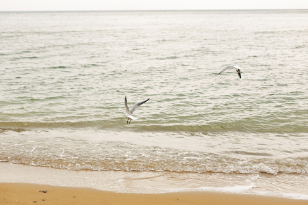 Seagulls flying at sandy beach near sea waves. Wild birds on shore of ocean, windy weather. Relaxing on tropical island. Let's go travel. Summer vacation Stock Photo - 117334617