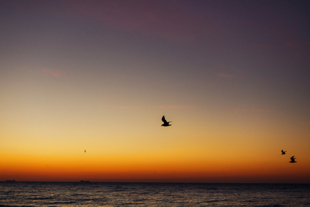 Beautiful view of seagulls flying in sky at sunrise in sea. Birds in colorful sky during sun rise, atmospheric moment. Sunset, dusk or dawn horizon in ocean. Summer vacation on tropical island Stock Photo - 117334626