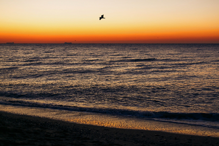 Beautiful view of seagulls flying in sky at sunrise in sea. Birds in colorful sky during sun rise, atmospheric moment. Sunset, dusk or dawn horizon in ocean. Summer vacation on tropical island Stock Photo