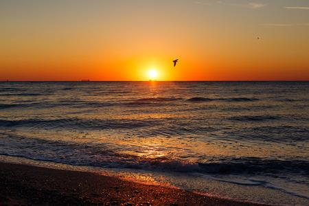 Schöne Aussicht auf Möwen, die bei Sonnenaufgang im Meer in den Himmel fliegen. Vögel im bunten Himmel bei Sonnenaufgang, atmosphärischer Moment. Sonnenuntergang, Dämmerung oder Dämmerungshorizont im Ozean. Sommerurlaub auf einer tropischen Insel