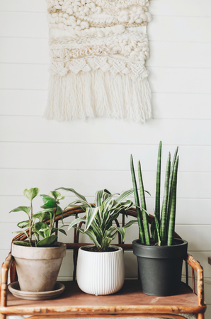 Stylish green plants in pots on wooden vintage stand on background of white rustic wall with embroidery hanging. Peperomia, sansevieria, dracaena plants, modern room decor Stock Photo
