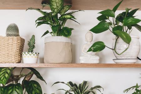 Stylish wooden shelves with green plants and budha statue. Modern hipster room decor. Epipremnum pothos, cactus, dieffenbachia, dracaena,  palm, flower pots on shelf.