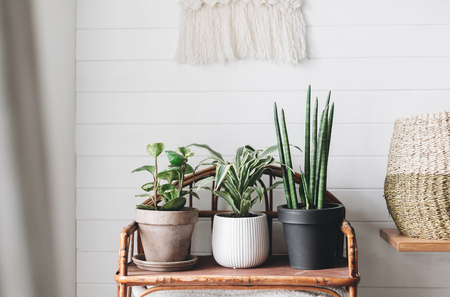 Stylish green plants in pots on wooden vintage stand on background of white rustic wall with embroidery hanging. Peperomia, sansevieria, dracaena plants, modern room decor, boho bedroom Stockfoto