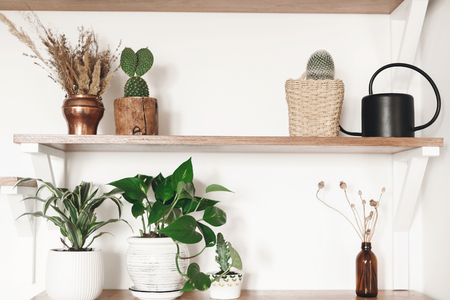 Stylish wooden shelves with green plants, black watering can, boho wildflowers. Modern hipster room decor. Cactus, epipremnum pothos, dracaena flower pots on shelf 스톡 콘텐츠