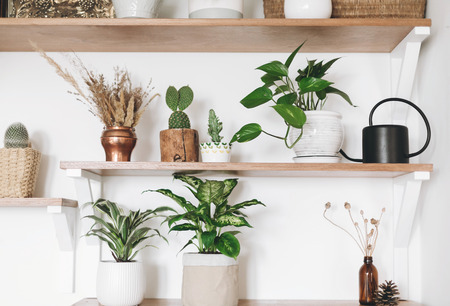 Stylish wooden shelves with green plants, black watering can, boho wildflowers. Modern hipster room decor. Cactus, epipremnum pothos, dracaena, dieffenbachia flower pots on shelf