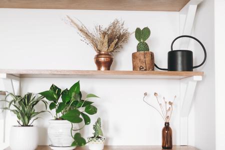 Stylish wooden shelves with green plants, black watering can, boho wildflowers. Modern hipster room decor. Cactus, epipremnum pothos, dracaena flower pots on shelf Stock Photo