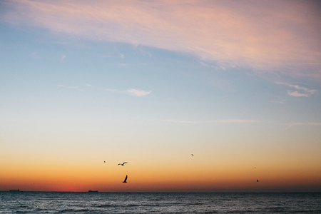 Beautiful seagulls flying in pink sky and sun rise above sea waves on tropical island. Waves in ocean at sunset light. Tranquil calm moment. Summer vacation. Copy space