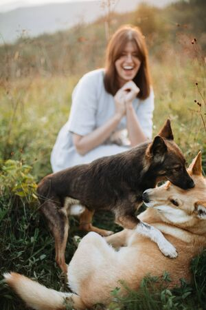 Stylish boho girl and  two cute dogs playing in grass and wildflowers in sunny meadow in mountains at sunset. Traveling together with pets. Young woman smiling at her dogs having fun