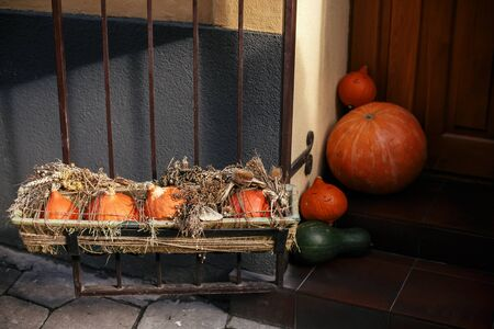Pumpkins and squash with dried herbs in city street, holiday decorations store fronts and buildings. Halloween street decor. Space for text. Trick or treat. Happy halloween. Autumn market