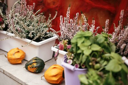 Pumpkins,squash and heather flowers in city street, holiday decorations store fronts and buildings. Halloween street decor. Space for text. Trick or treat. Happy halloween. Autumn market