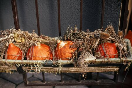 Halloween street decor.Pumpkins and squash with dried herbs in city street, holiday decorations store fronts and buildings.  Space for text. Trick or treat. Happy halloween. Autumn market