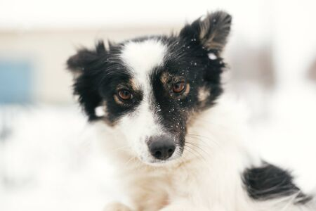 Cute scared dog in person hands in snowy winter park. People hugging little black and white doggy at shelter. Adoption concept. Stray fluffy puppy