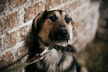 Cute scared dog looking from cage in old shelter, waiting for someone to adopt. Little german shepherd puppy with sad eyes at shelter in old barn. Adoption concept. Stray doggy Reklamní fotografie