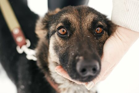 Person caressing cute scared puppy with sad eyes in snowy winter park. People hugging mixed breed german shepherd dog on a walk at shelter. Adoption concept. Stray doggy