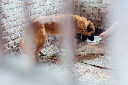Hand giving water to cute dog in cage at old shelter. Adorable mixed breed brown dog drinking water from bowl behind bars in cage. Adoption concept. Stockfoto - 128205114