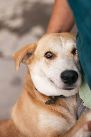 Person hugging adorable yellow dog with funny cute emotions. Hand caressing cute homeless dog with sweet looking eyes in summer park. Adoption concept.