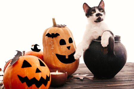Happy Halloween. Funny kitten sitting in black witch cauldron with jack o lantern pumpkins, bats, spider and burning candle on dark wood.Trick or treat 版權商用圖片