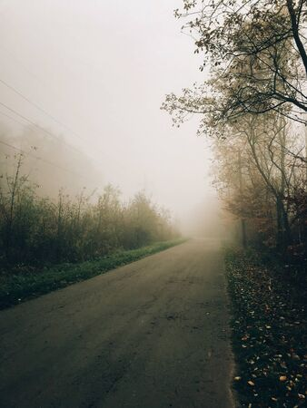 Autumn road in woods with fall leaves in foggy cold morning. Mist in autumn forest. Tranquil moment. Hello fall. Atmospheric mystical morning