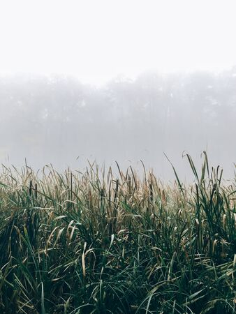 Foggy lake, green grass in mist in cold autumn morning on background of woods. Tranquil moment. Hello fall. Autumn background. Atmospheric morning