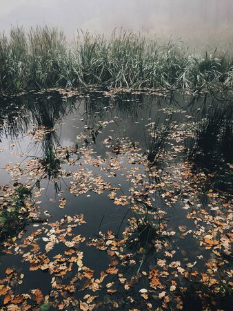 Autumn leaves in water,  foggy lake in autumn woods in cold morning. Mist in autumn forest. Tranquil moment. Hello fall. Atmospheric morning Фото со стока
