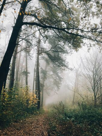 Autumn path in foggy woods with fall leaves in cold morning. Mist in autumn forest with yellow leaves. Tranquil moment. Atmospheric morning. Hello fall
