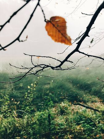 Autumn leaf on tree branch with cobweb and drops of dew  in foggy  autumn woods in cold morning. Mist in autumn forest. Tranquil moment. Hello fall. Atmospheric morning