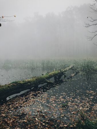 Old fallen trees with moss in foggy lake in autumn woods in cold morning. Mist in autumn forest. Tranquil moment. Hello fall. Autumn background. Atmospheric morning