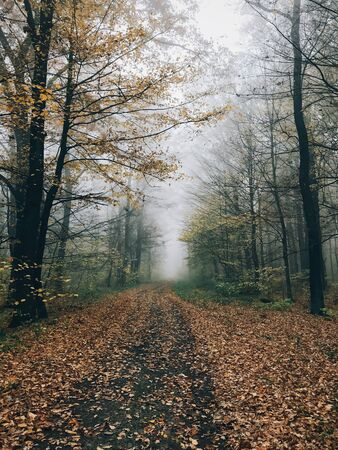 Road in autumn woods with fall leaves in foggy cold morning. Mist in autumn forest with yellow leaves. Tranquil moment. Atmospheric morning. Hello fall