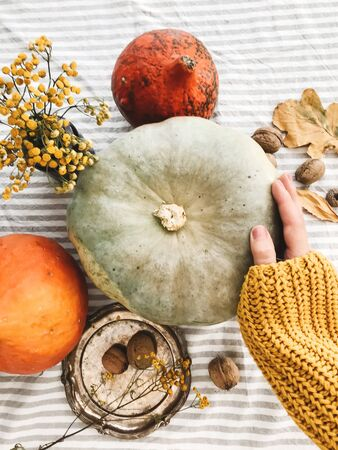 Hand in yellow sweater holding pumpkin and nuts, yellow flowers, fall leaves on rustic table, flat lay. Fall decor and arrangement on table. Autumn harvest. Thanksgiving concept
