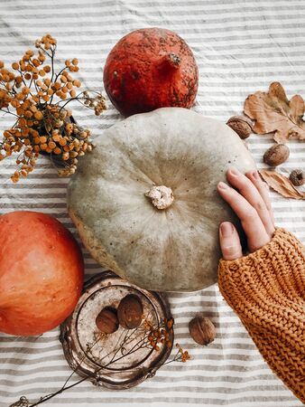 Thanksgiving concept. Hand in yellow sweater holding pumpkin and nuts,  flowers, fall leaves on rustic table, flat lay. Fall decor and arrangement on table. Autumn harvest.