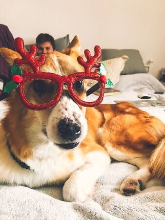 Cute golden dog in christmas festive glasses lying on owner bed  in stylish room. Happy holidays. Festive pets. Funny dog in glasses with reindeer antlers and cute expression. Phone photo
