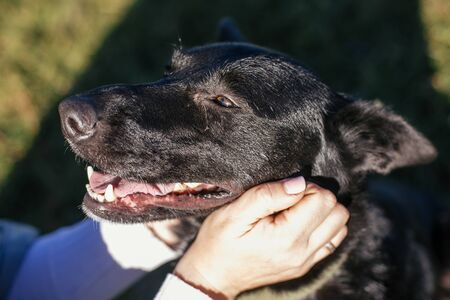 Person caressing cute black dog. Volunteer hugging mixed breed dog in green park. Adoption from shelter concept. Sweet black dog on walk