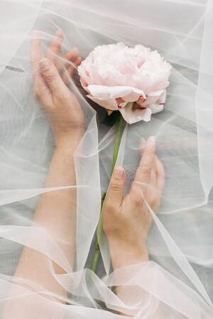 Fragrance and treatment concept. Hands under tulle gently holding peony flower on dark background. Aesthetic soft image. Tender pink peony behind veil.