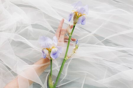 Woman hand behind veil gently holding blue iris flower on dark background. Aesthetic soft image. Hand under tulle touching flower. Fragrance and treatment concept