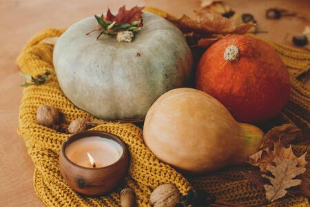 Pumpkins, autumn leaves, candle and acorns, walnuts, berries on yellow knitted sweater on rustic wood. Hello fall. Cozy rustic autumn image. Happy Thanksgiving