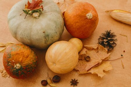 Happy Thanksgiving. Pumpkins, autumn leaves, acorns,chestnuts, cone on rustic wooden table in sunny room. Autumn seasonal harvest.  Fall food and decor