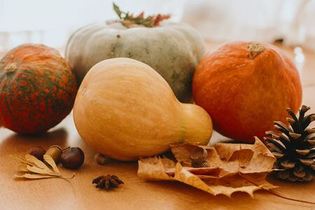 Pumpkins, autumn leaves, acorns,chestnuts, cone on rustic wooden table in sunny room. Autumn seasonal harvest. Happy Thanksgiving. Fall food and decor