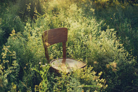 Rustic wooden chair among wildflowers and herbs in summer meadow in sunset light. Slow living, summer in countryside. Atmospheric tranquil moment