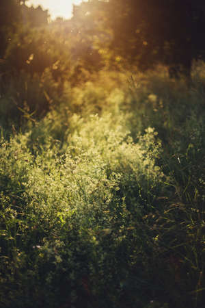 Wildflowers and herbs in summer meadow in sunset light. Slow living, summer in countryside. Atmospheric tranquil moment