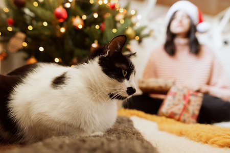 Cute cat sitting on background of woman in santa hat with presents and christmas tree with lights. Funny kitty in modern festive room. Pets and holidays Banco de Imagens