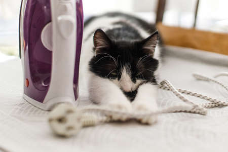Adorable cat sleeping at iron cable on modern cloth. Laundry and housekeeping concept. Cute black and white cat relaxing on ironing board in stylish room, cozy moment.