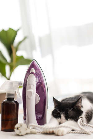 Adorable lazy cat sleeping at iron on modern cloth. Cute black and white cat relaxing on ironing board in stylish room, cozy moment. Little helper at home. Laundry and housekeeping concept