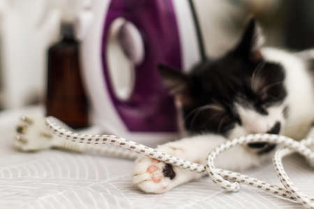 Adorable cat paws close up, lazy cat sleeping in iron cable on modern cloth. Cute black and white cat relaxing on ironing board in stylish room, cozy moment. Little helper at home